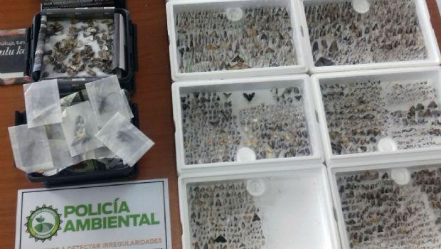Córdoba: Incautan insectos y semillas nativas a turistas finlandeses