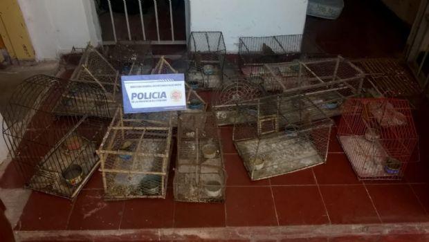 Secuestran aves en un domicilio de San Carlos Minas