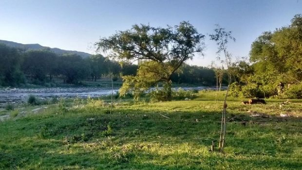 Cosquín revierte el daño ambiental reemplazando árboles exóticos por nativos