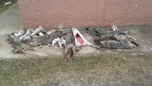 Secuestran a cazadores animales y armas en Serrano