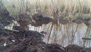 Hallaron restos humanos dentro de la avioneta caída en el delta del Paraná